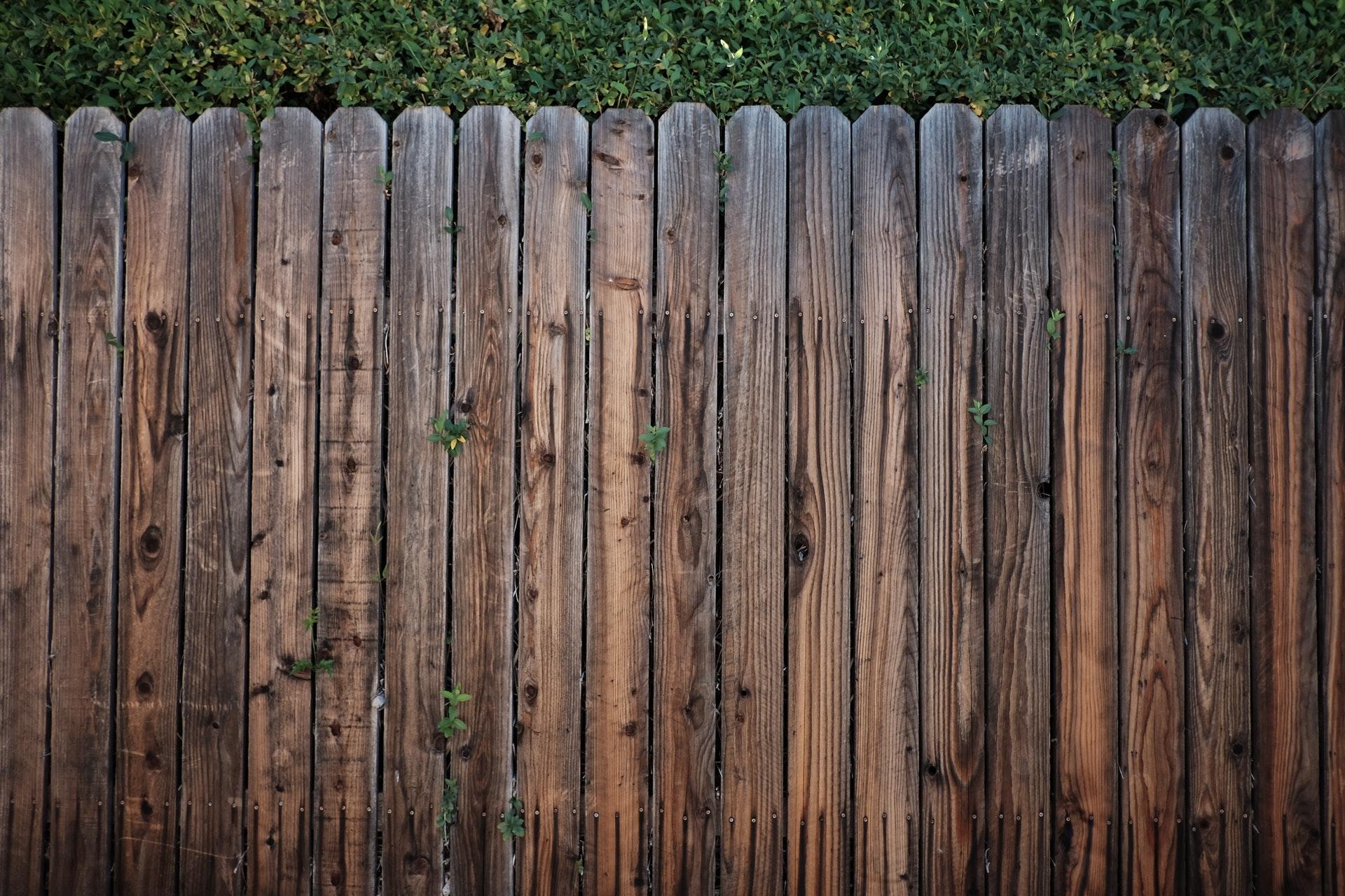 pexels-snapwire-113726